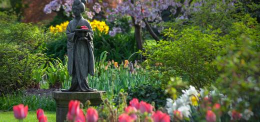 Blumen-Geisha