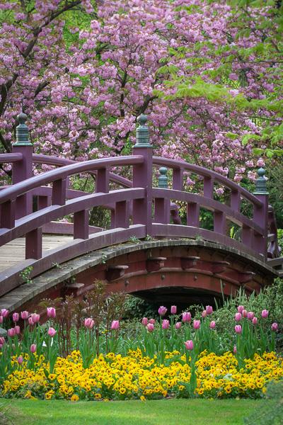 Frühling im Japanischen Garten Leverkusen - Brennweite Welt