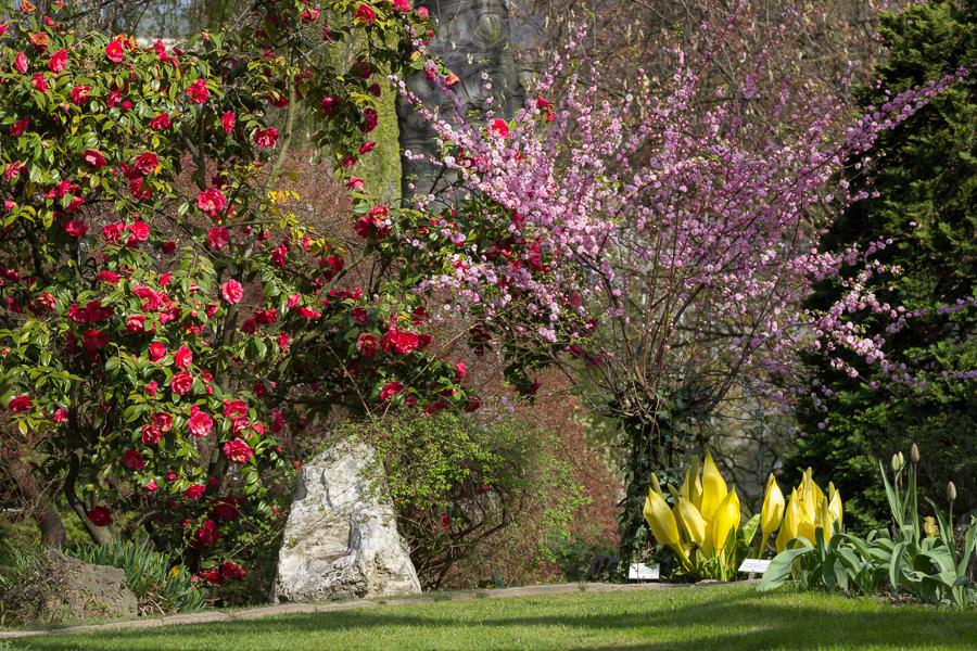 Blumen-Farbspektrum