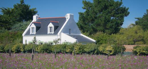 Blumenwiese auf Belle-Île