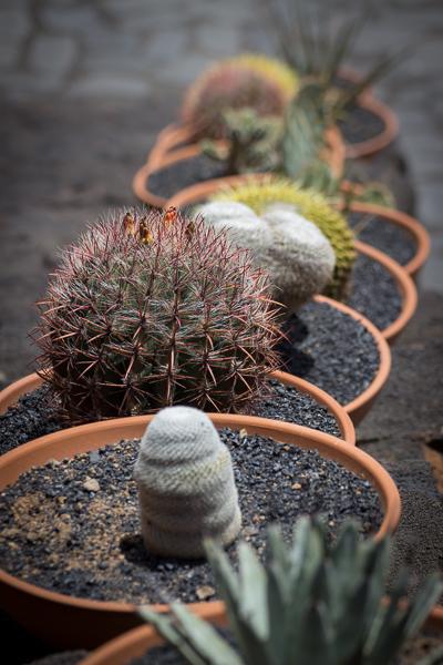 Kaktusreihe
