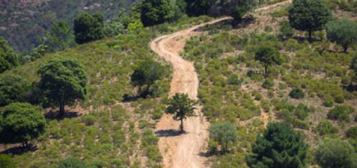 Baum im Weg